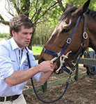 Equine Dentist Henry McAthur