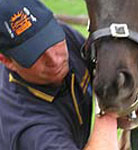 Equine dentist Paul Campbell